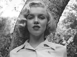 A 24-year-old Marilyn, wearing a simple button-down shirt monogrammed with her initials, leans against a tree in LA
