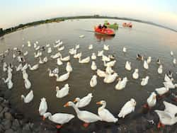 http://www.hindustantimes.com/Images/popup/2014/12/lake123_compressed.jpg