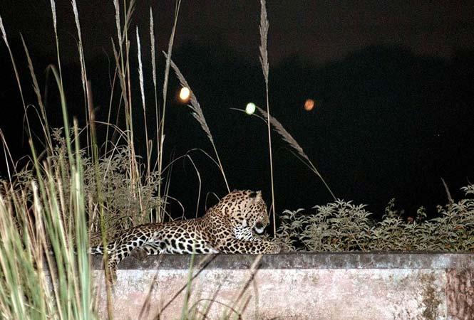 https://www.hindustantimes.com/Images/popup/2014/2/Leopard14.jpg