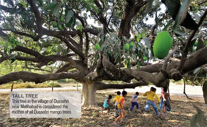 http://www.hindustantimes.com/Images/popup/2014/5/ht-brunch-delhi-pg09a.jpg