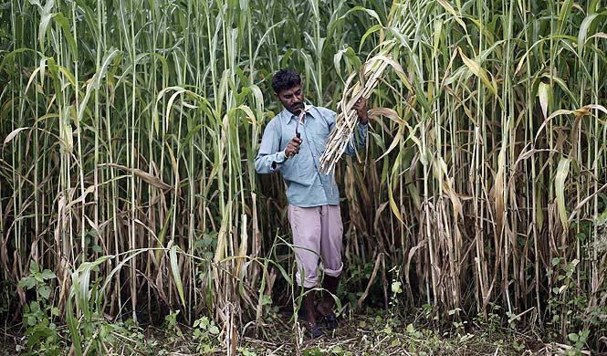 https://www.hindustantimes.com/Images/popup/2014/7/farmer6.jpg