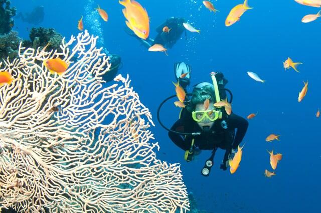 https://www.hindustantimes.com/Images/popup/2015/6/great-barrier-reef.jpg