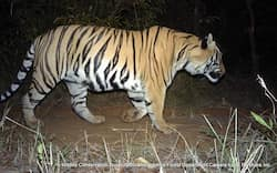 https://www.hindustantimes.com/Images/popup/2015/8/Tiger_Cam_Trap_Mah_WCT.jpg