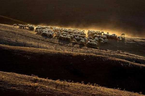 "Sheep grazing on a field are seen at the ""Crete Senesi"" (Siennese clays) area near Asciano, Italy, October 6, 2011. Reuters/Max Rossi Expanse of the Earth"