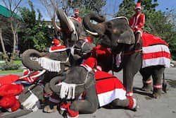 Elephants dressed in Santa Claus costumes perform for students ahead of the Christmas festival at a school in Ayutthaya province on December 23, 2011. Photo: AFP Santa Claus around the world
