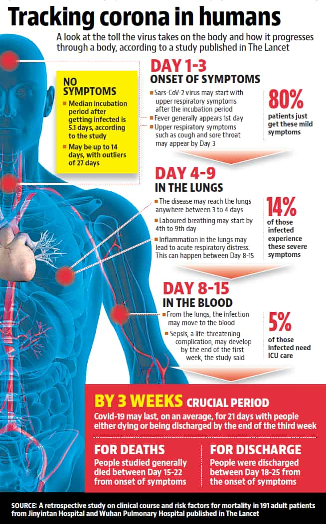 From Throat To Lungs And Blood How Coronavirus Impacts The Human Body India News Hindustan Times